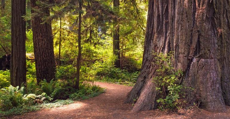 Path in Redwoods_1540.jpg
