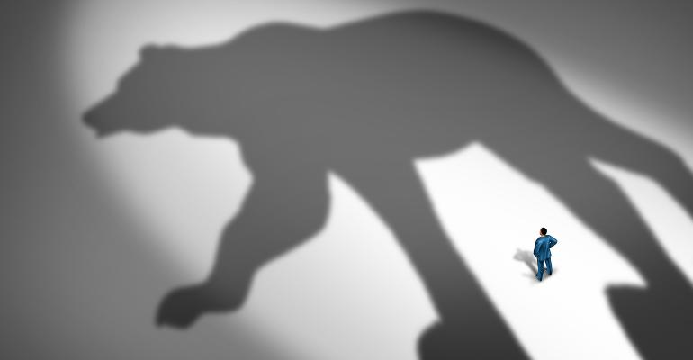 Bear long shadow