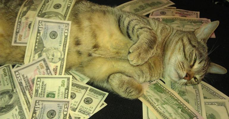 cash cat