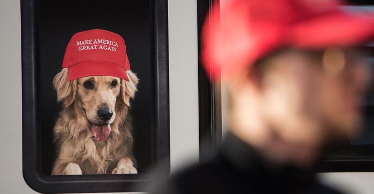 Trump hat dog