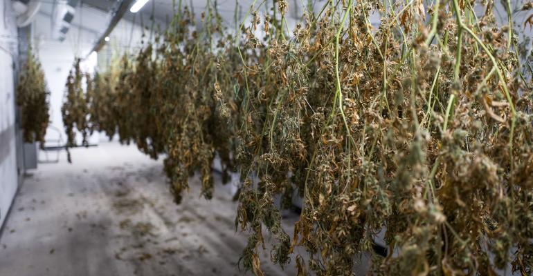 marijuana-warehouse