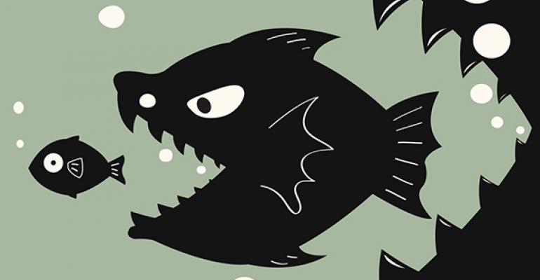 merger fish