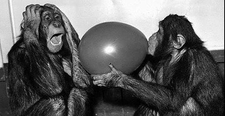 monkey blowing up balloon