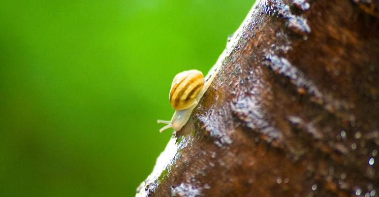 SEC Fiduciary Standard Moves Ahead…At a Snail's Pace