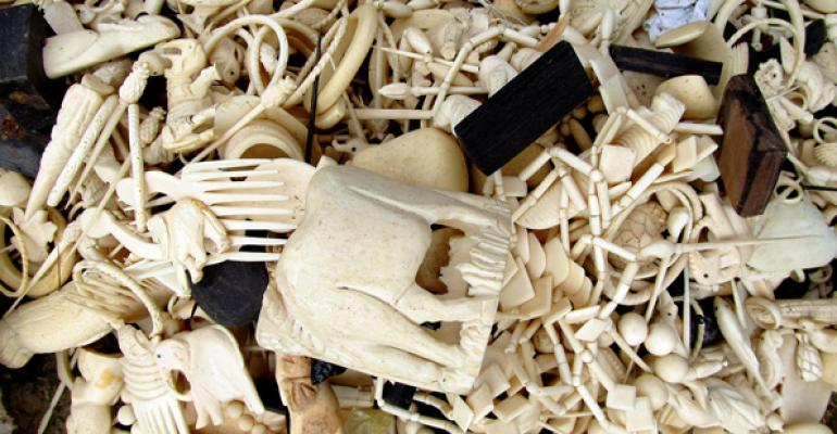 White House Announces a Ban on Commercial Trade of Elephant Ivory