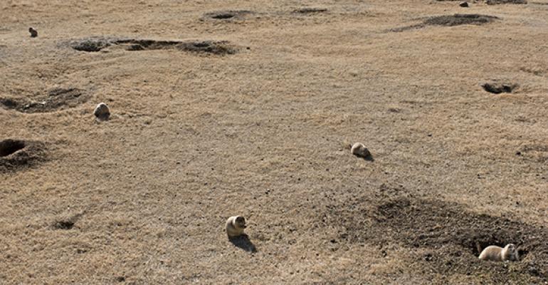 A prairie dog town