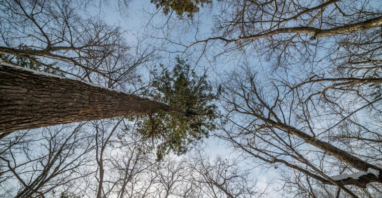 If Trees Don't Grow To The Sky: The Next 6 Years