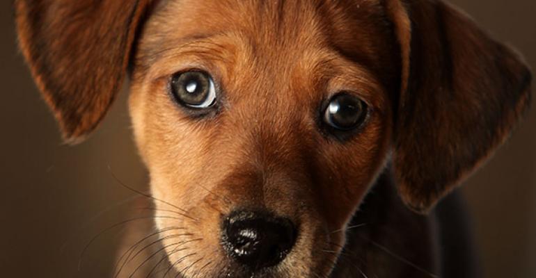 Pet Planning Considerations