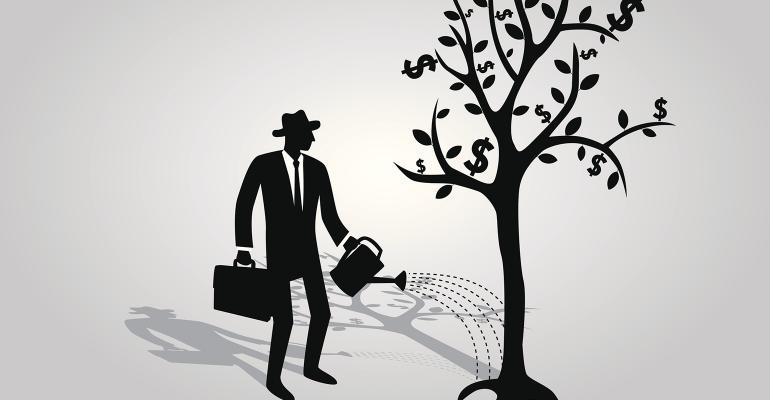 watering money tree