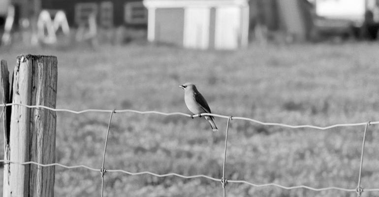 bird sitting on fence