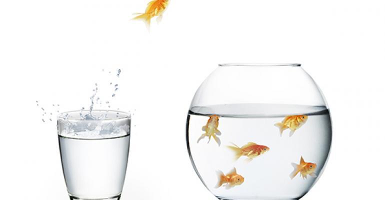 fish jumping bowl