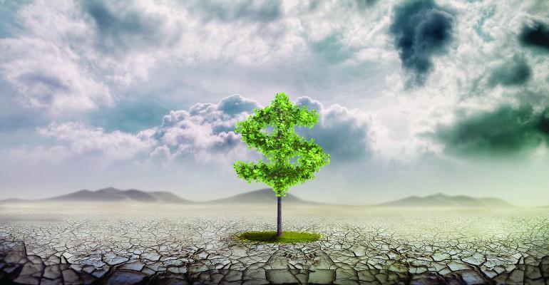 money tree SRI investing