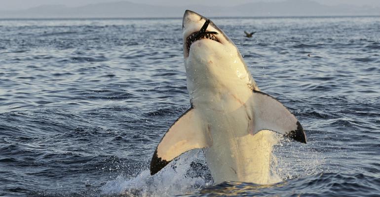 Has 'Fiduciary Standard' Jumped the Shark?