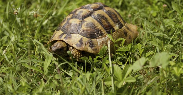 Clients, Like Turtles, Can Go Missing - How Can We Get Them Back?
