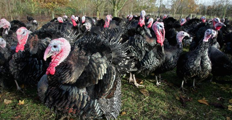Life of a Turkey